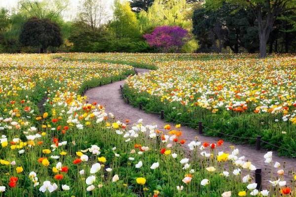 foto-park-met-bloemen-in-zomer-achtergrond-wallpaper