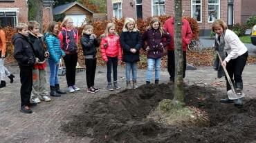 Aanplanten Wilhelminaboom Vlagtwedde