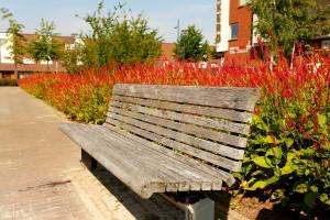vaste plant, persicaria, vitaal groen, strijp 02